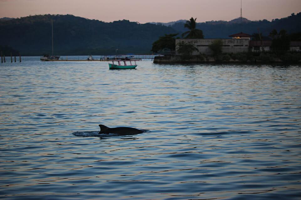 golfito dauphins costa rica
