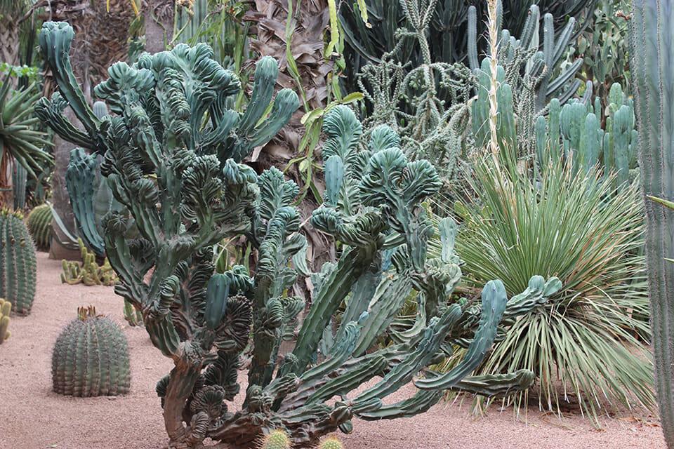 jardin majorelle maroc marrakech