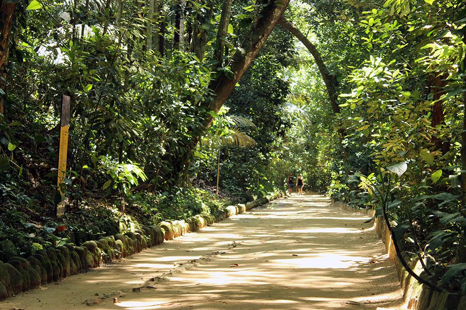 rio-jardin-botanique