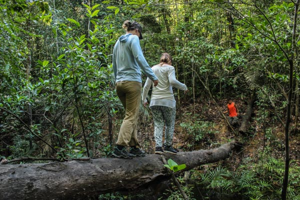 trek-amazonie-arbre