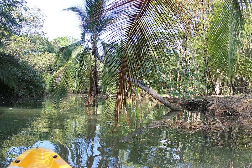 mangrove costa rica
