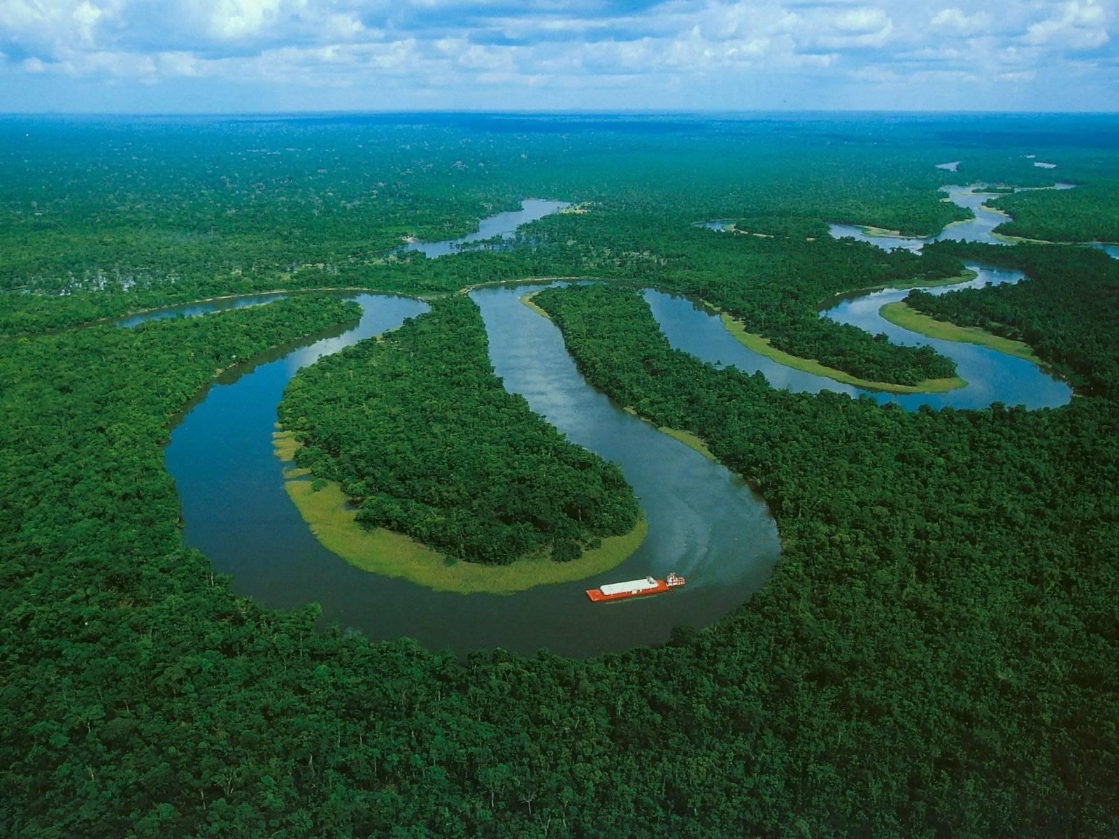 Envol Vert : S'engager pour la forêt amazonienne !