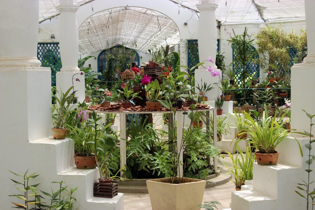 rio-jardin-botanique-serre