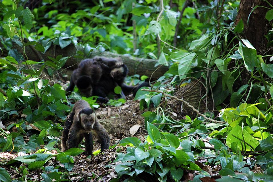 rio-jardin-botanique-singes