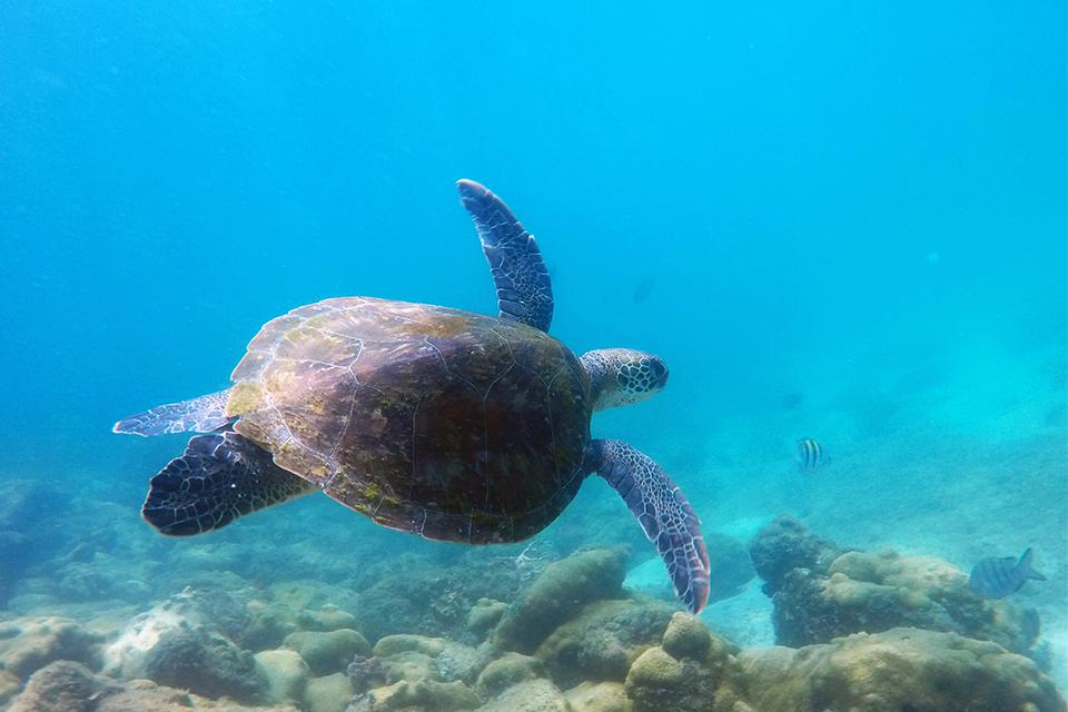 ilha-grande-lago-azul-tortue