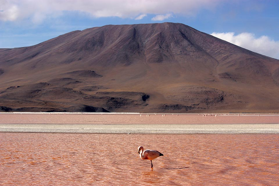 flamand rose laguna colorada