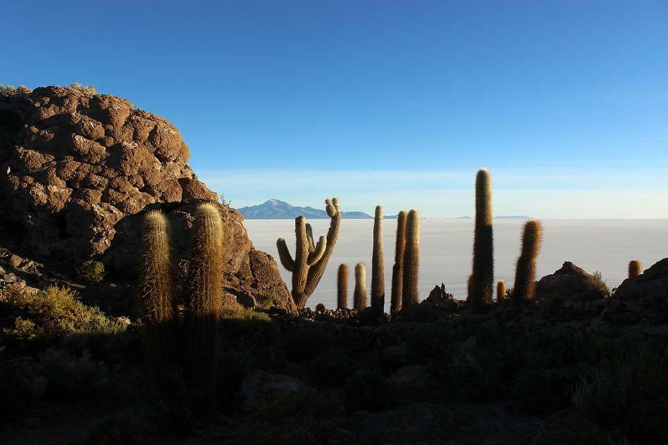 isla, incahuasi, desert uyuni