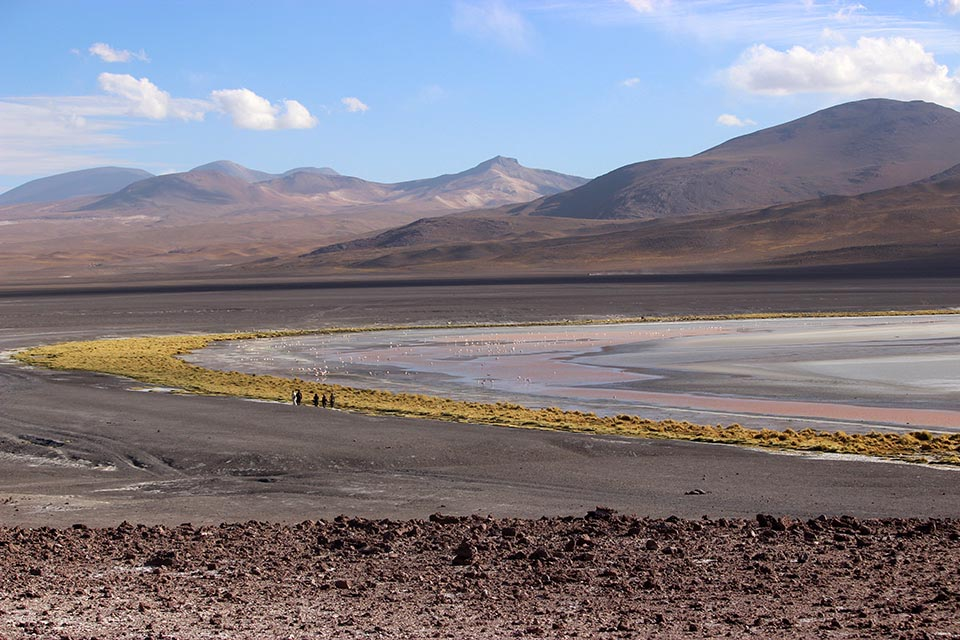 laguna,colorada,flamand rose