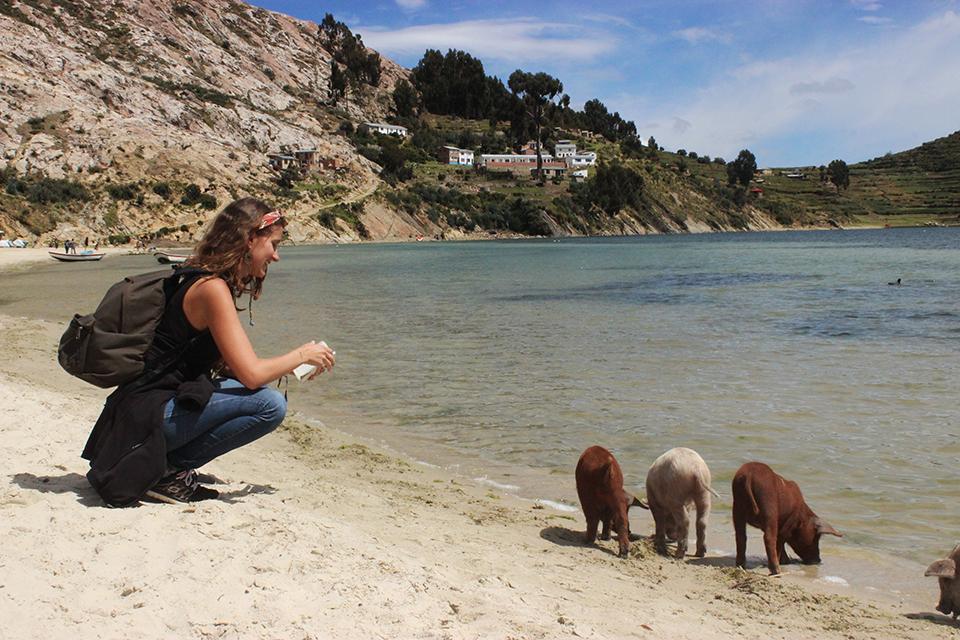 explore le monde, bolivie, cochons