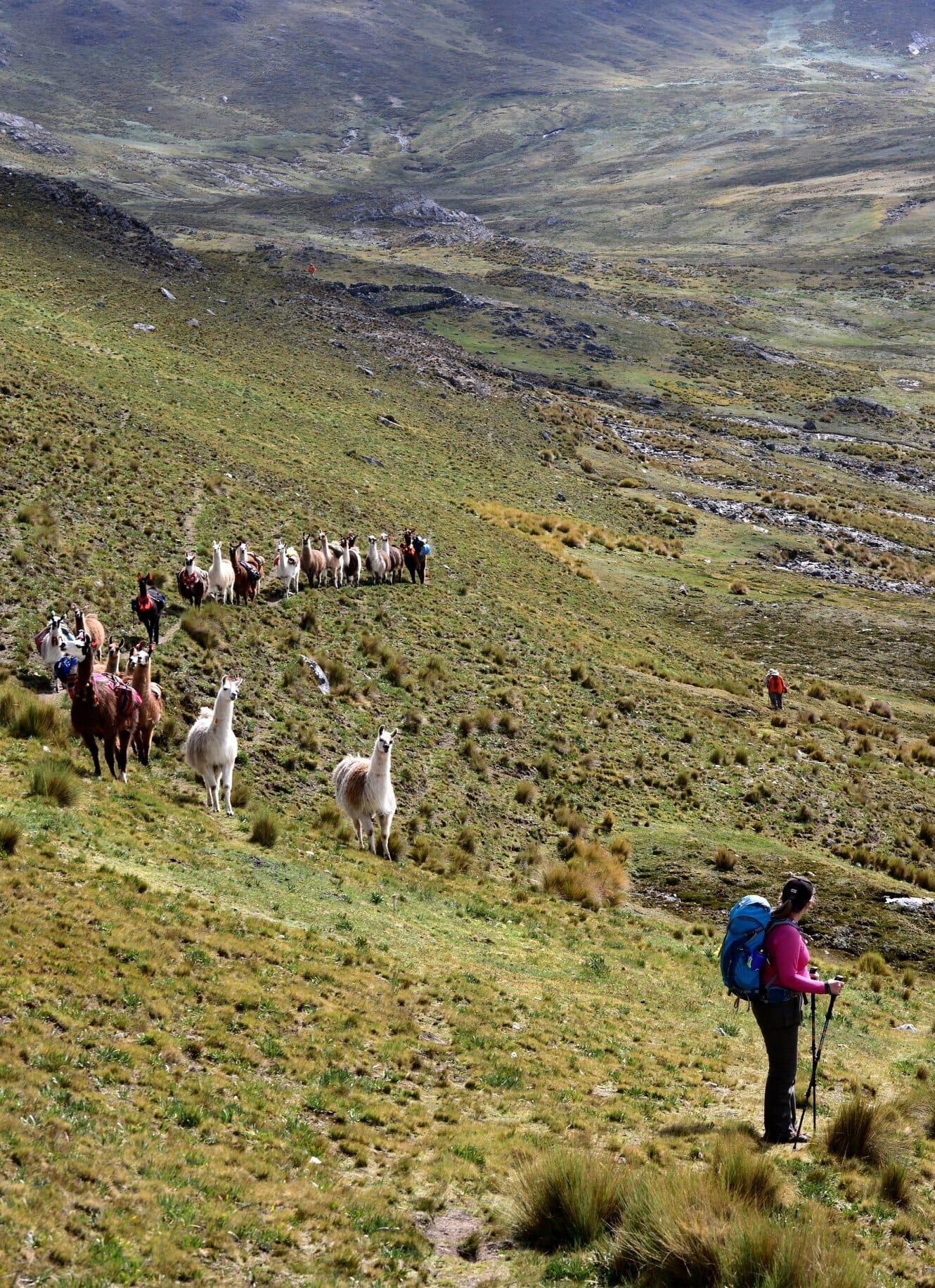 randonnée avec des lamas dans la vallée sacrée avec Lama Pack