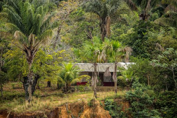 amazonie-mangrove-bresil-nature