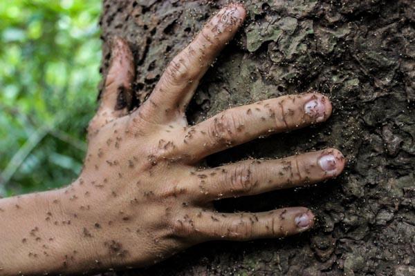 trek-amazonie-fourmis