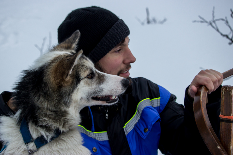 Laponie-traineau-chien
