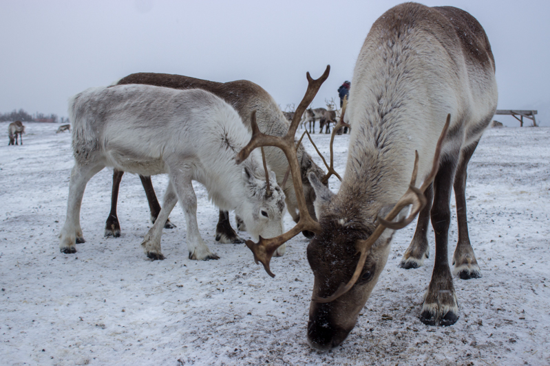 rennes-tromso-norvege