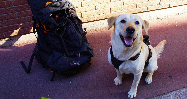 Adopter un chien en voyage, l'histoire d'Elqui !