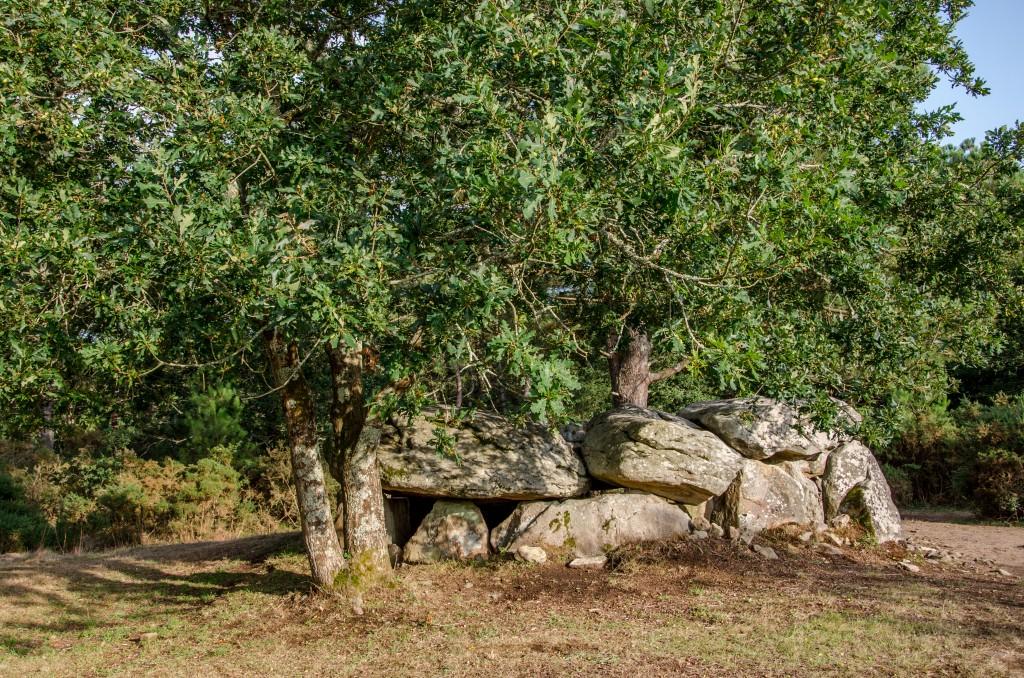 sejour-bretagne-segway-forêt-dolmen