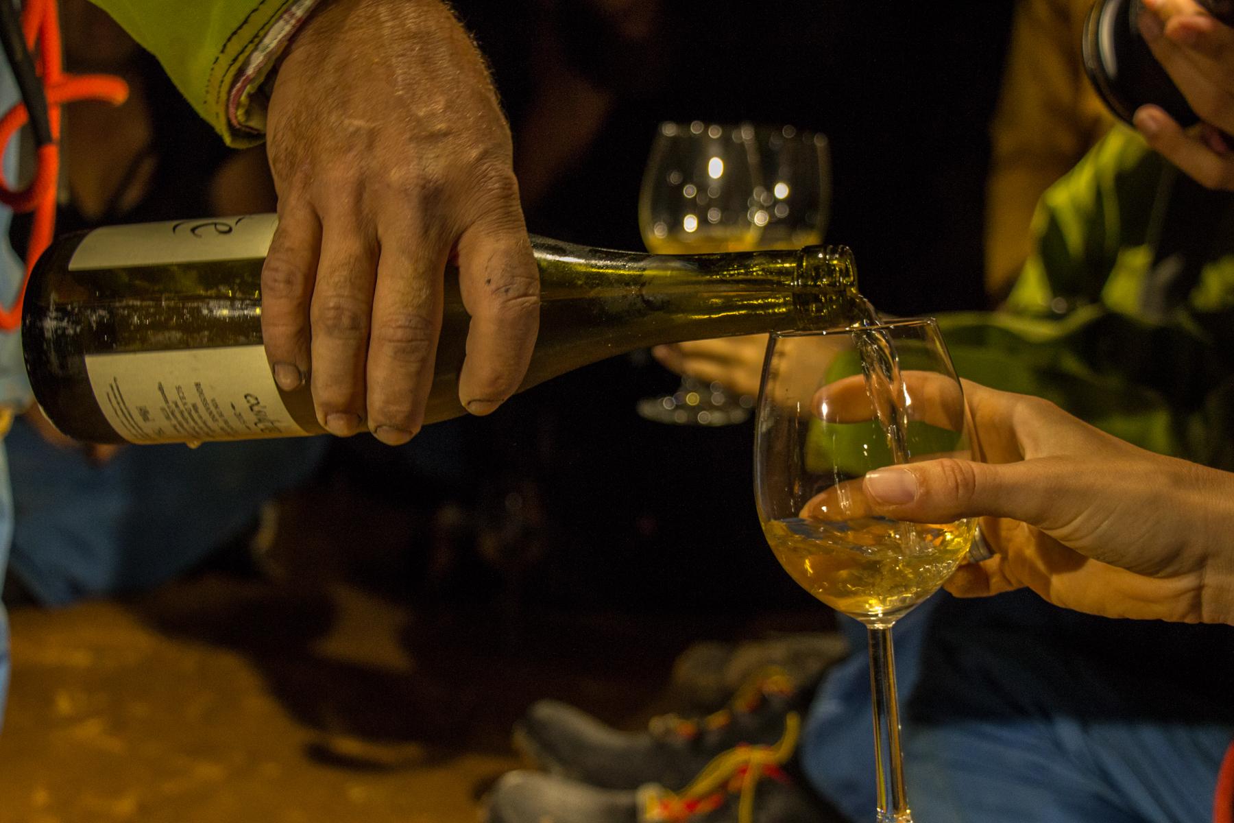 vin-oenologie