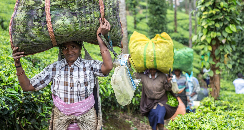 Kumily, l'Inde des épices et du thé