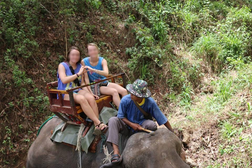 bullhook-elephant-balade