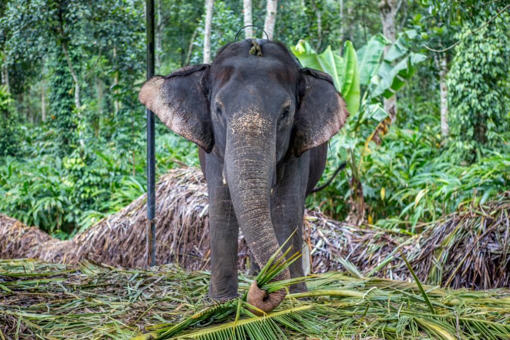 elephant-phajaan-inde