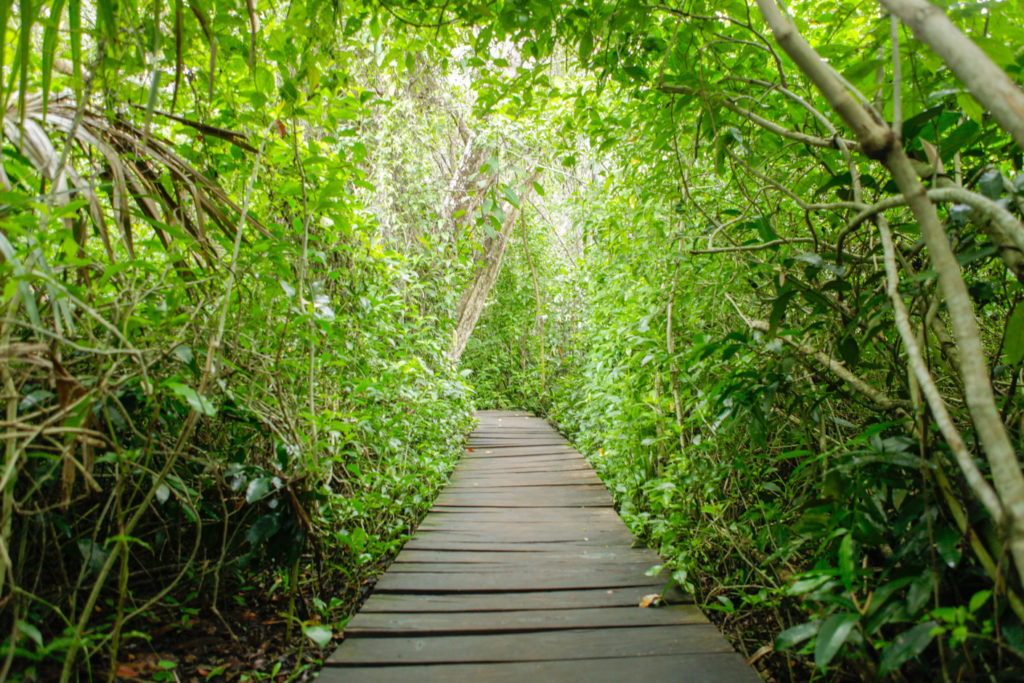 Muyil-sian ka'an-reserve-mexique-laguna