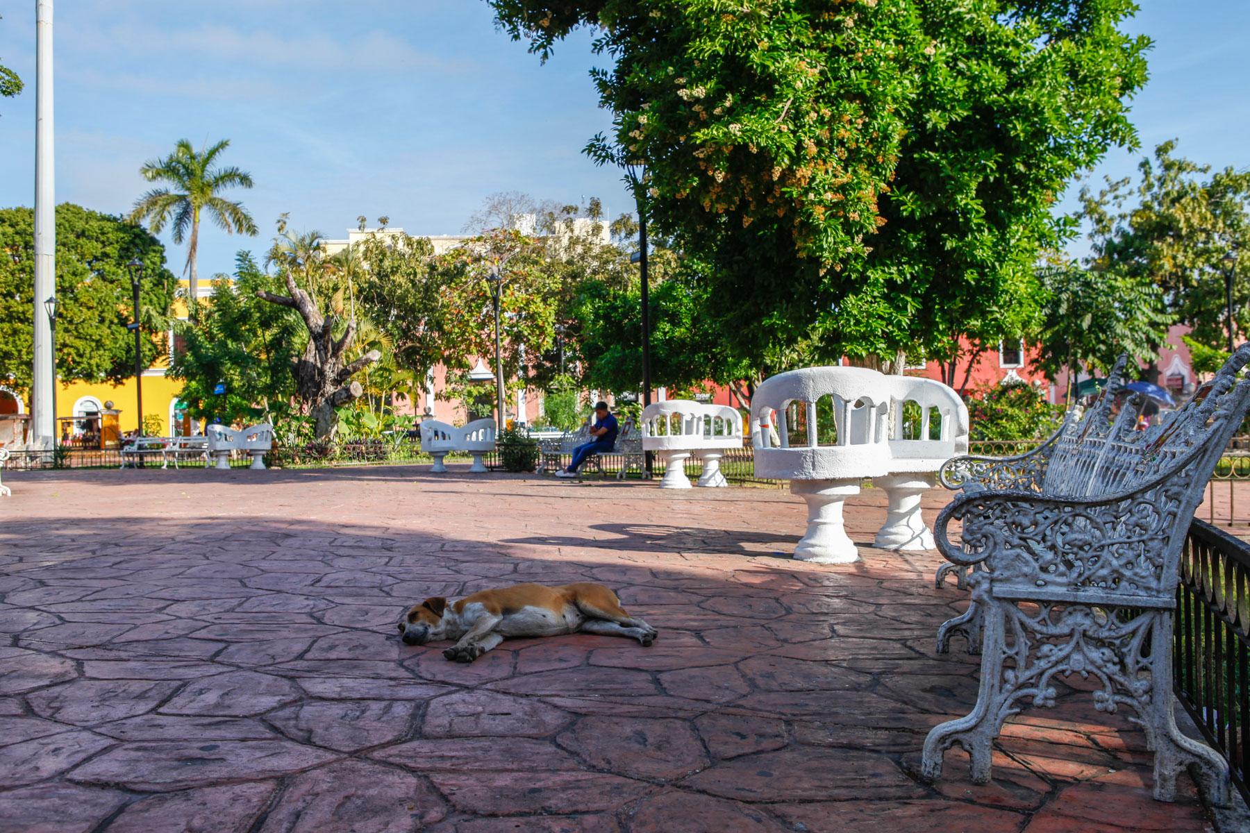 Valladolid-Mexique-voyage-parc