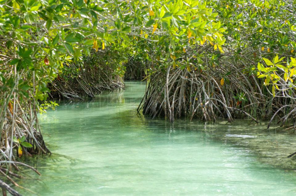 La réserve naturelle de Sian Ka'an