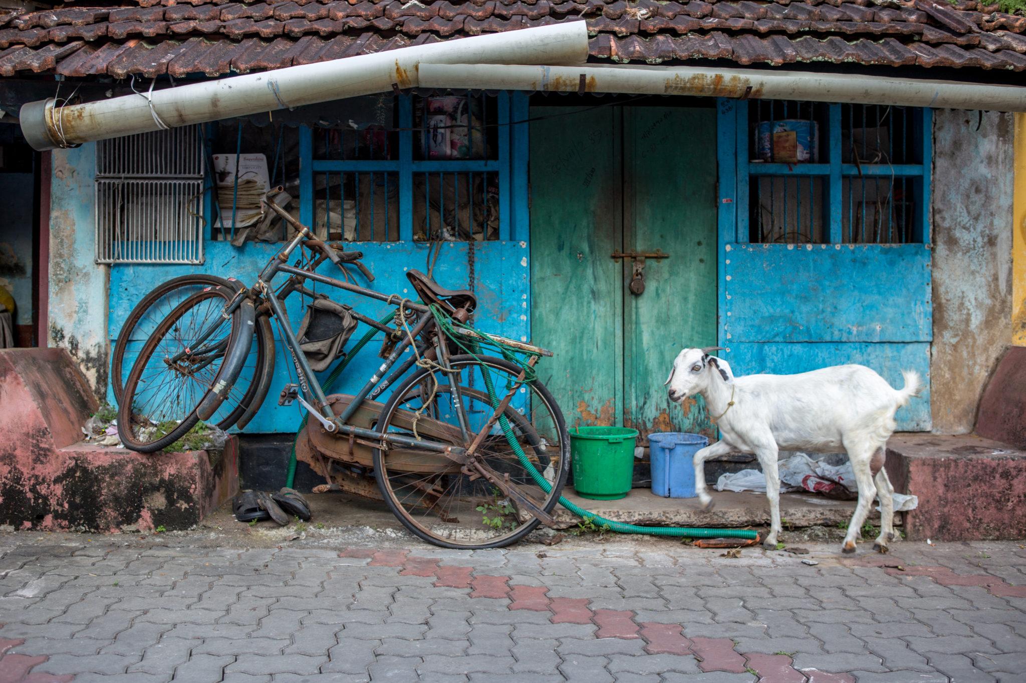 cochin-inde-visite-kerala