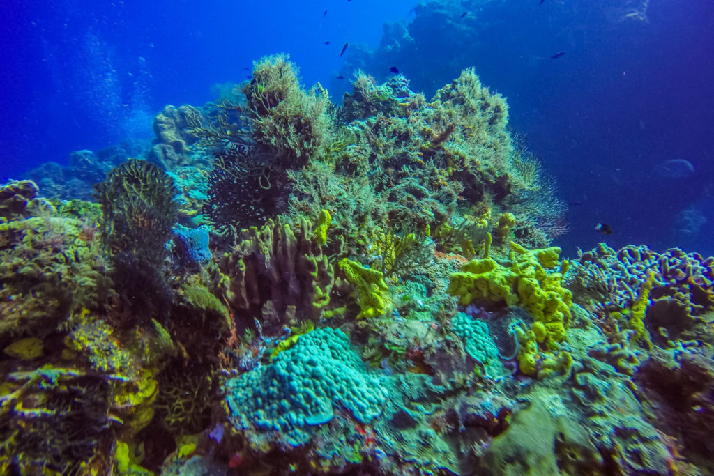 plongée-cozumel-voyage-mexique