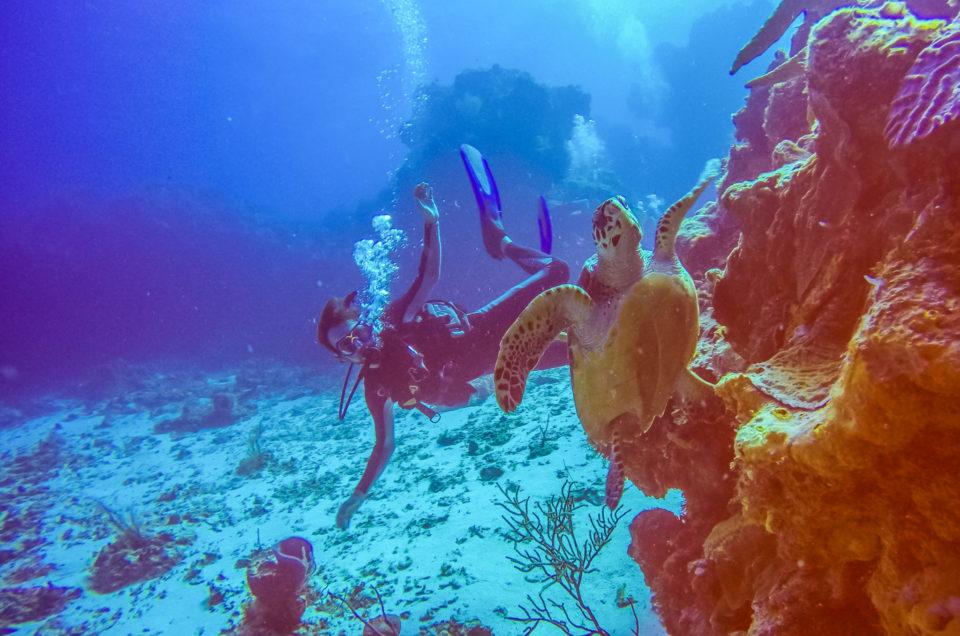 Cozumel, découvertes de l'île et ses trésors