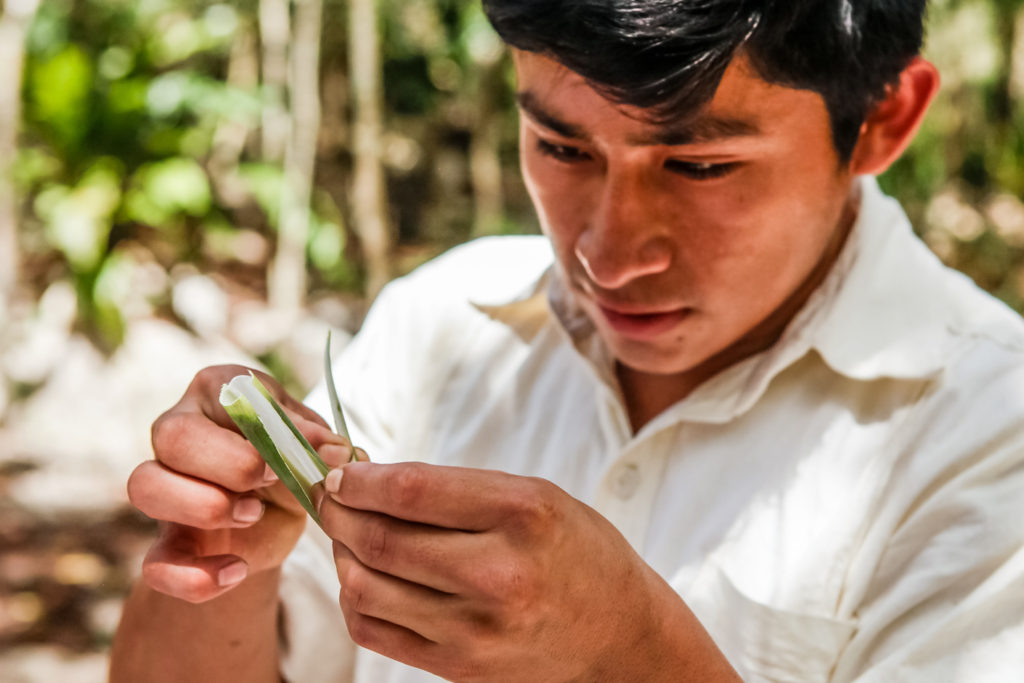 punta-laguna-maya-tabac