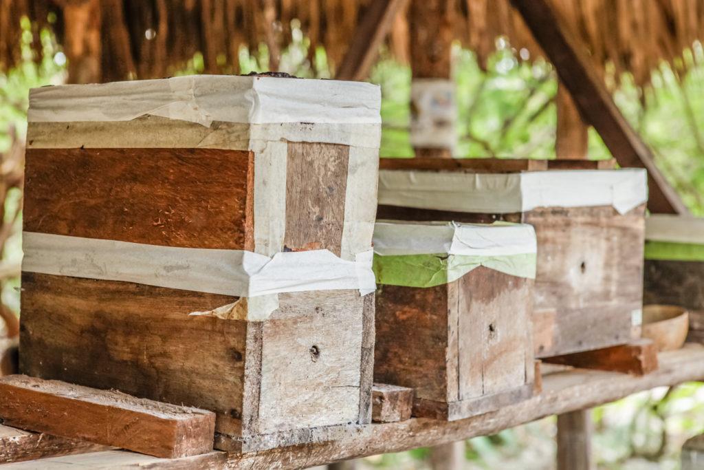 punta-laguna-mexique-abeilles-mayas