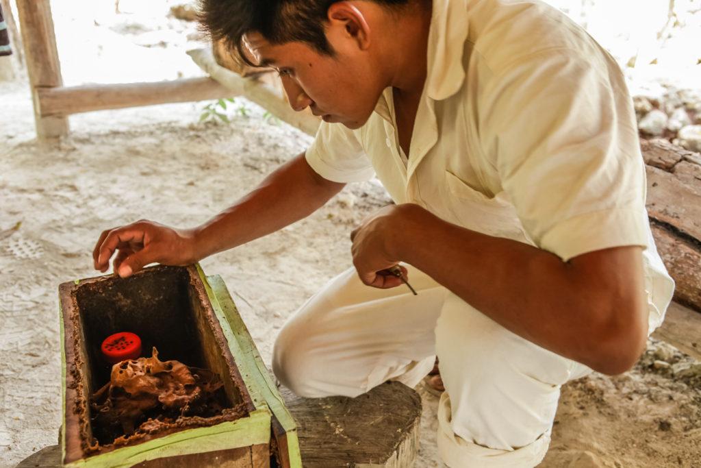 punta-laguna-mexique-maya-meliponas