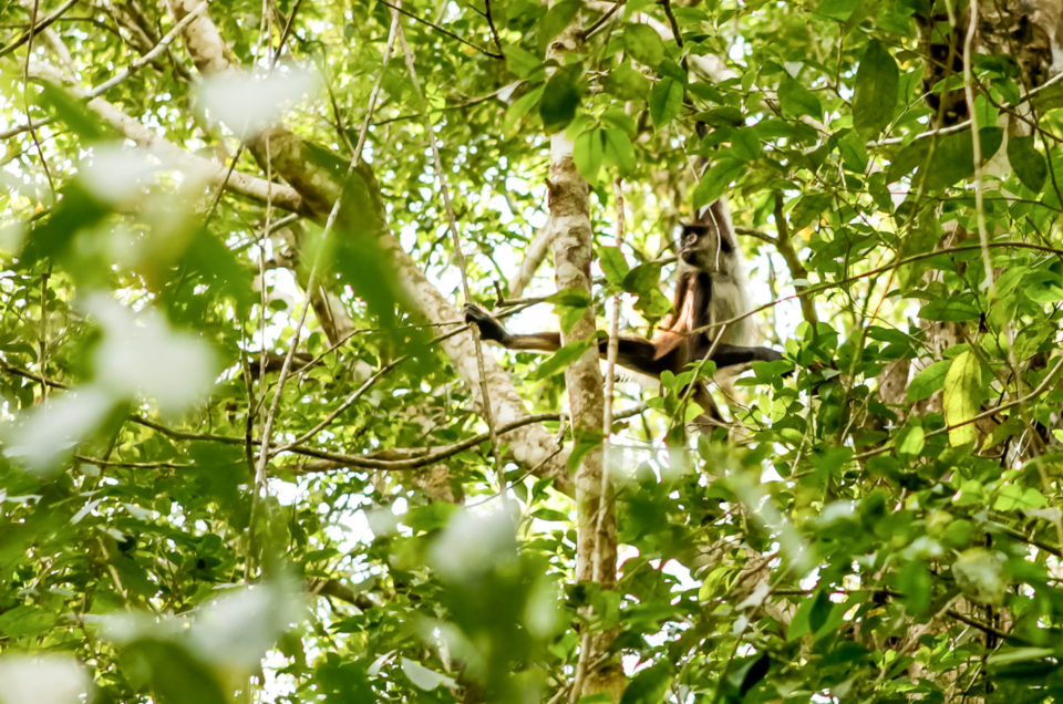 Punta Laguna : communauté maya, singes et cenote sacré