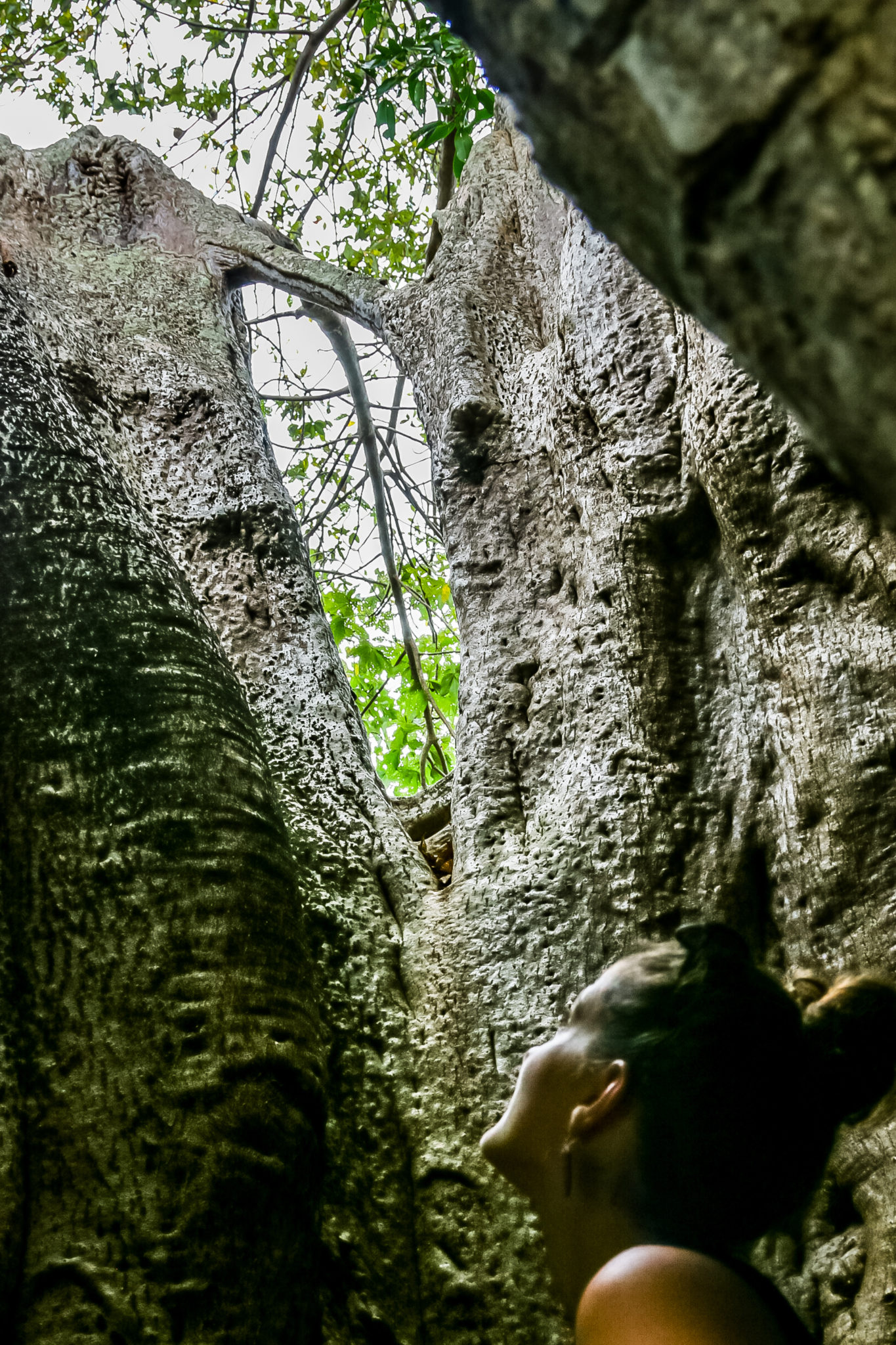 baobab-comores-nature-ile-voyage