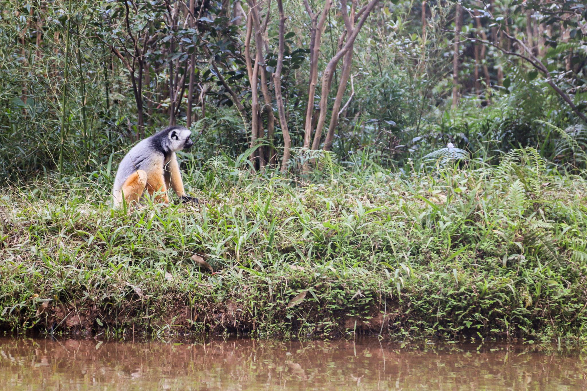 lémurien-madagascar-animaux-voyage
