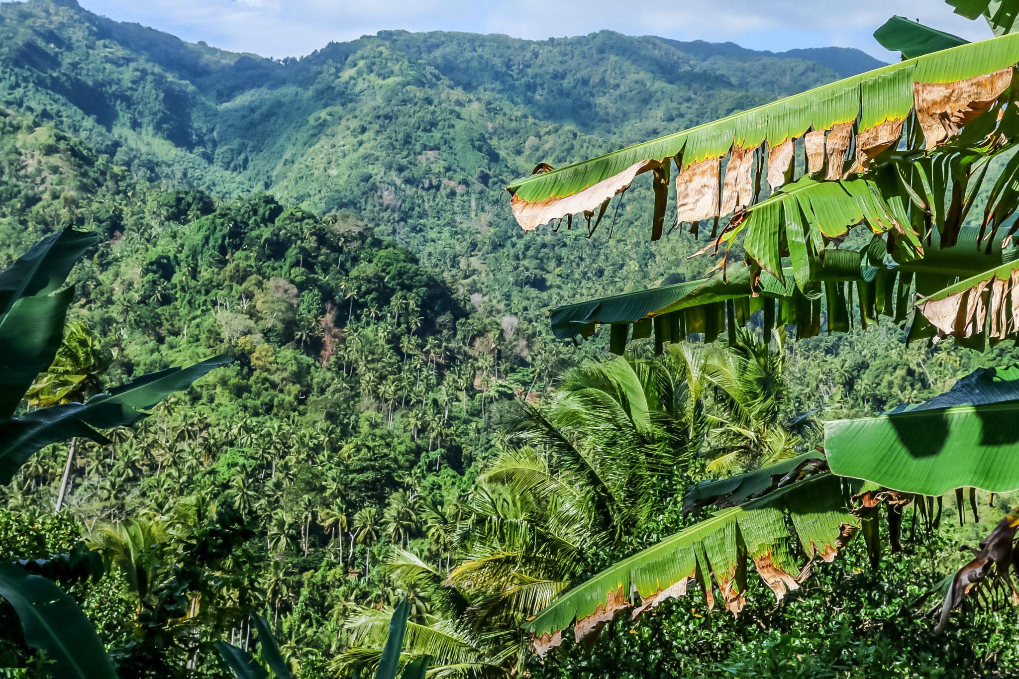 moheli-voyage-madagascar-comores-jungle