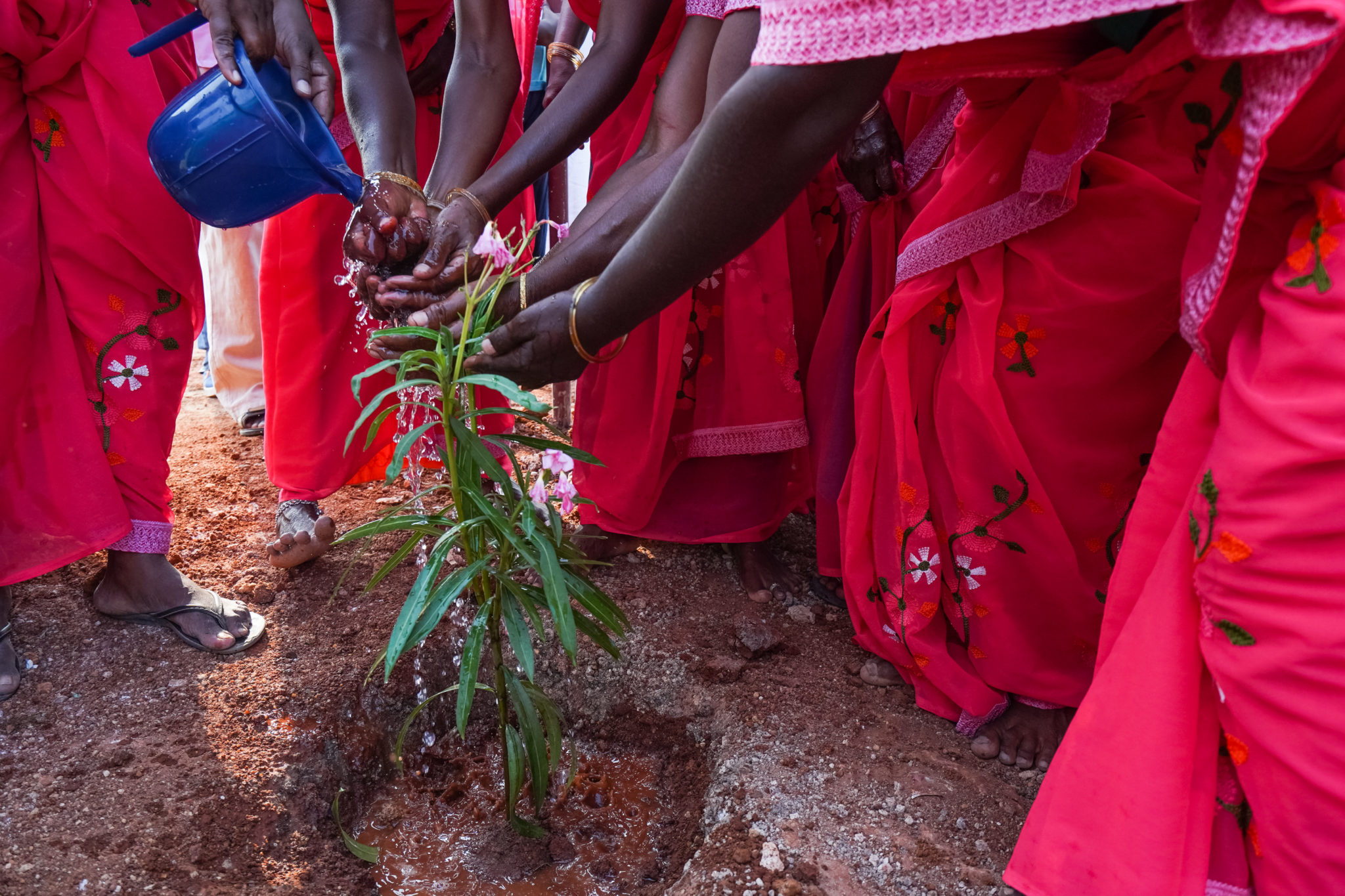 kynarou-inde-eau-sanitaire-inauguration-arbres