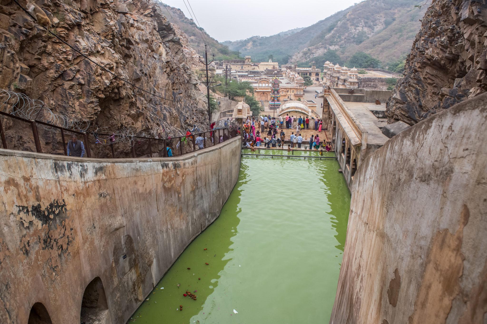 monkey-singe-temple-visite-inde-jaipur-voyage