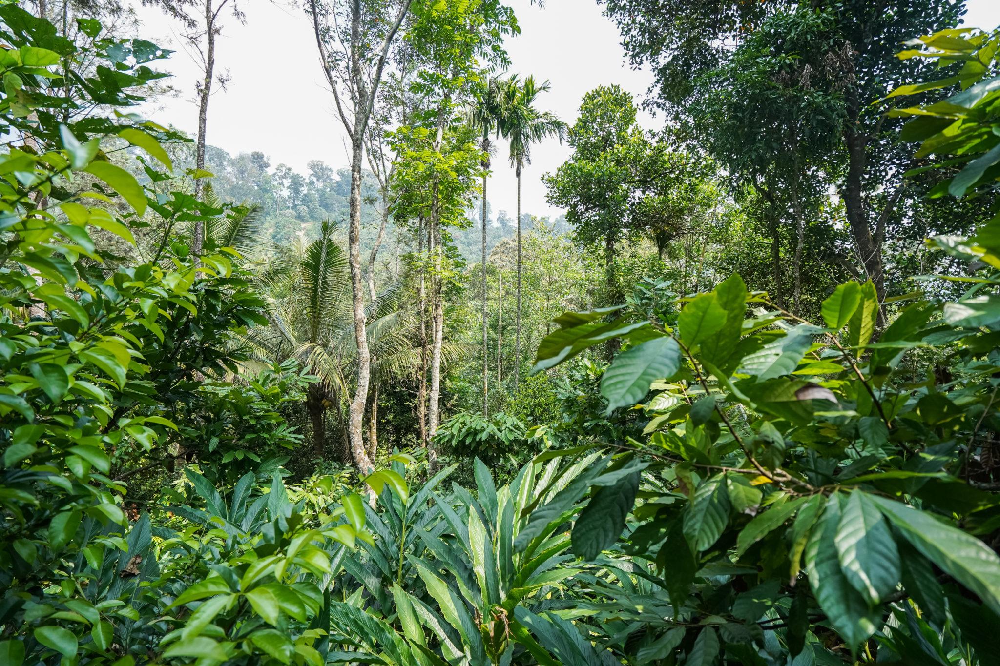 Kerala-munnar-plantation-épice-thé-visite-inde