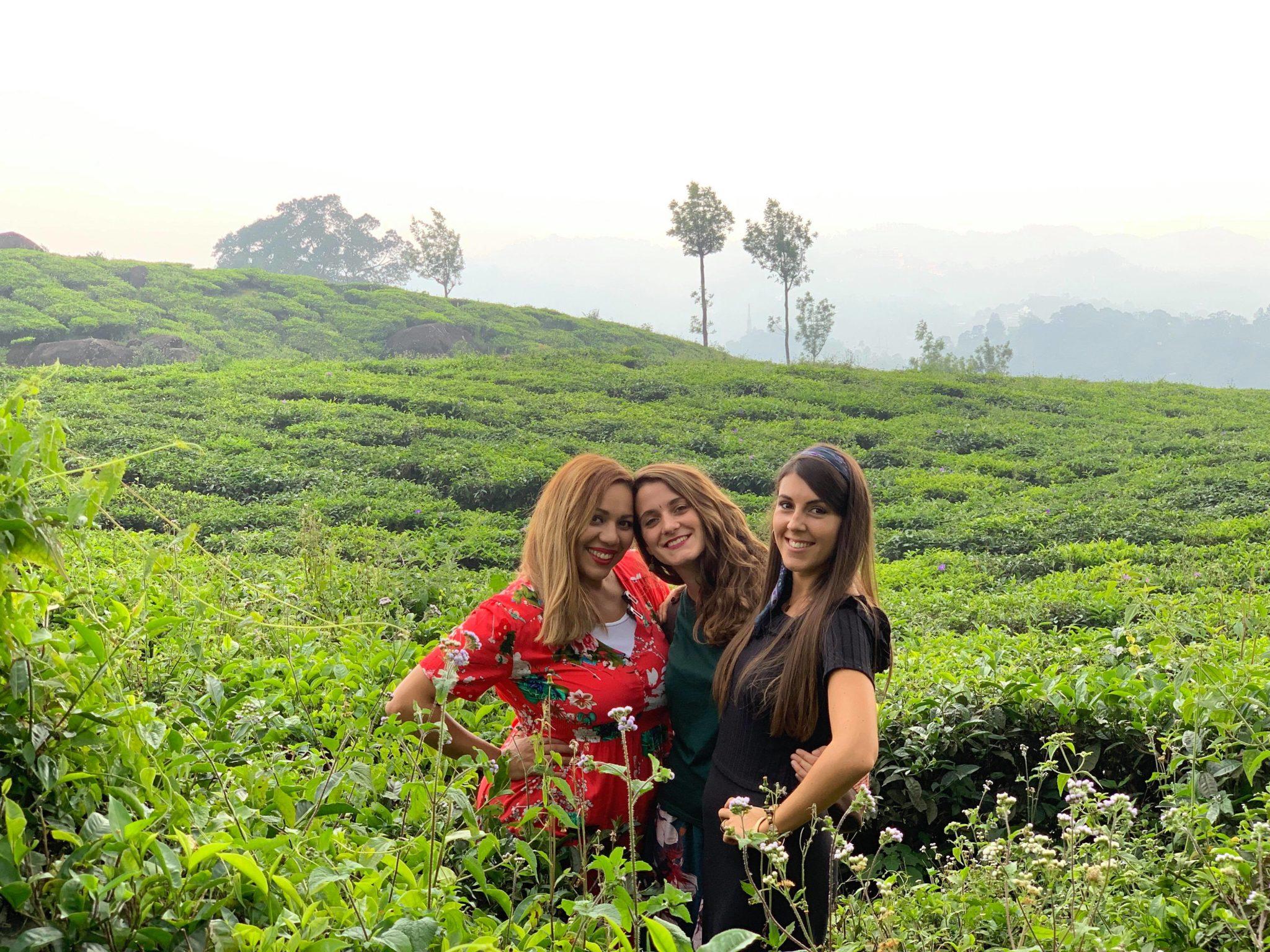 Munnar-plantations-inde-kerala
