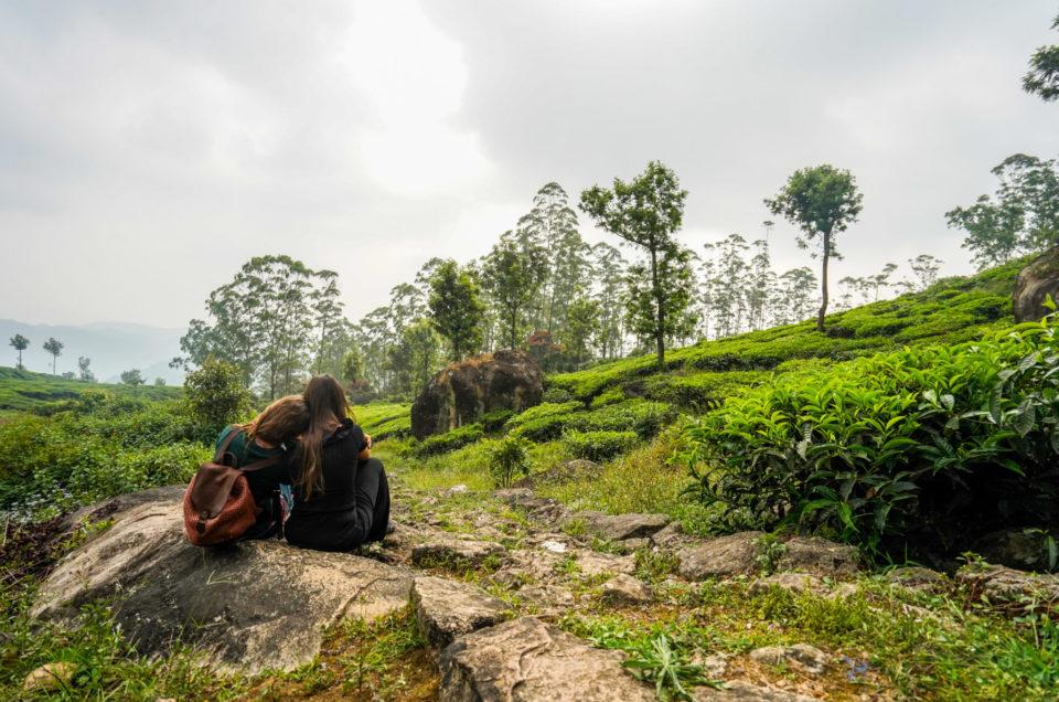 Munnar, au coeur des plantations de thé