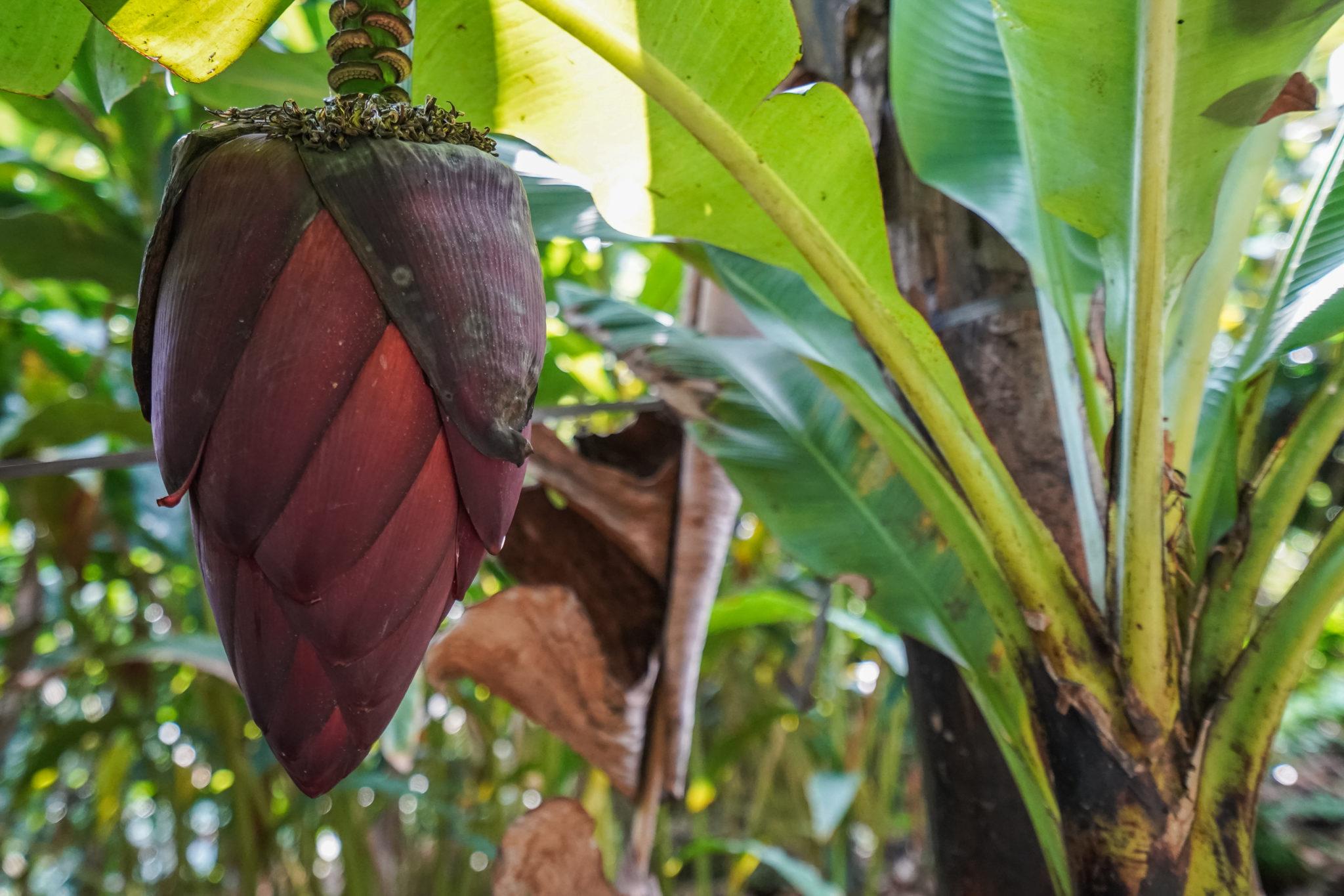ferme-épices-munnar-inde-visite-plantations