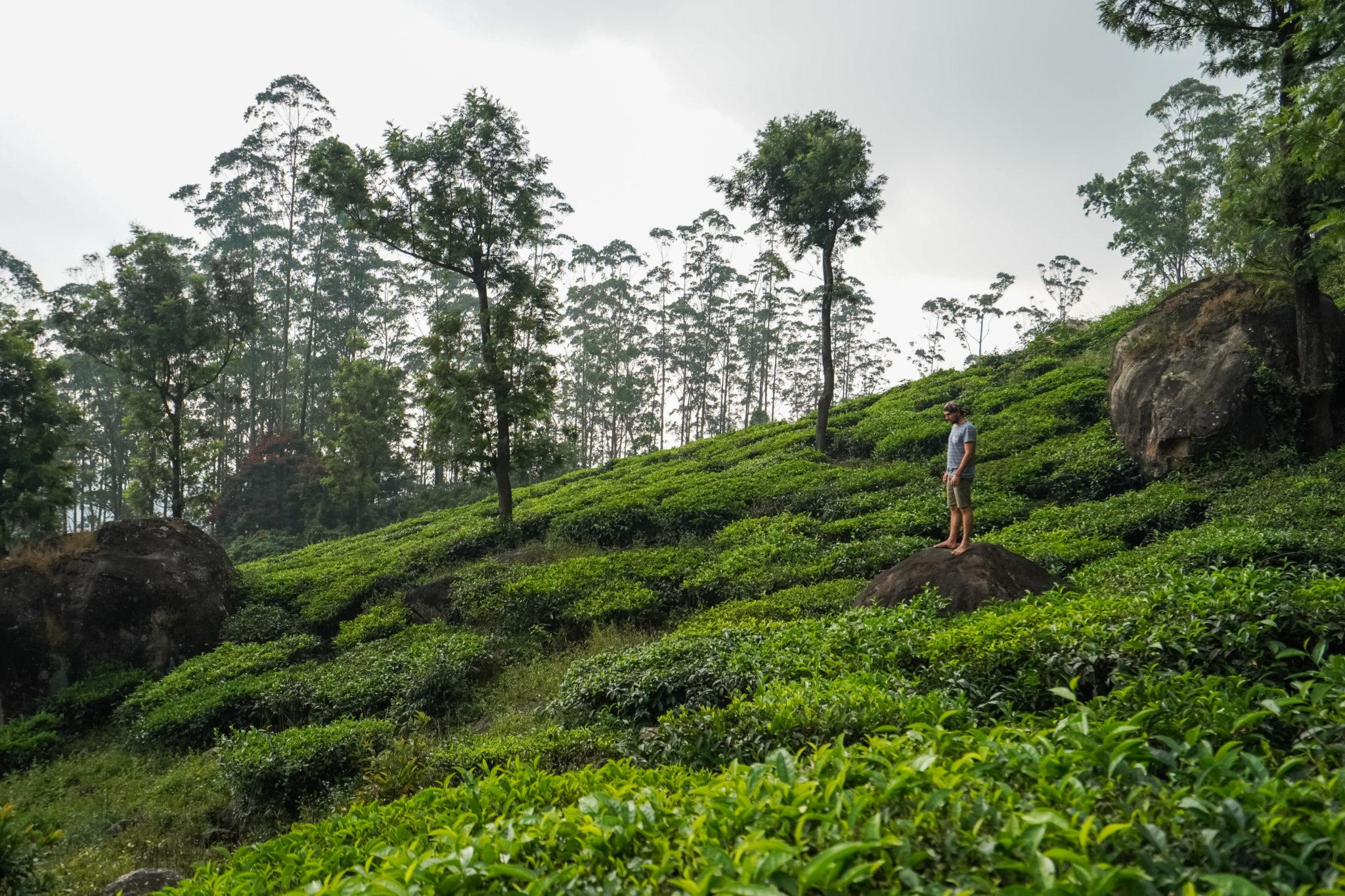 tea-plantations-munnar-kerala-visite-inde
