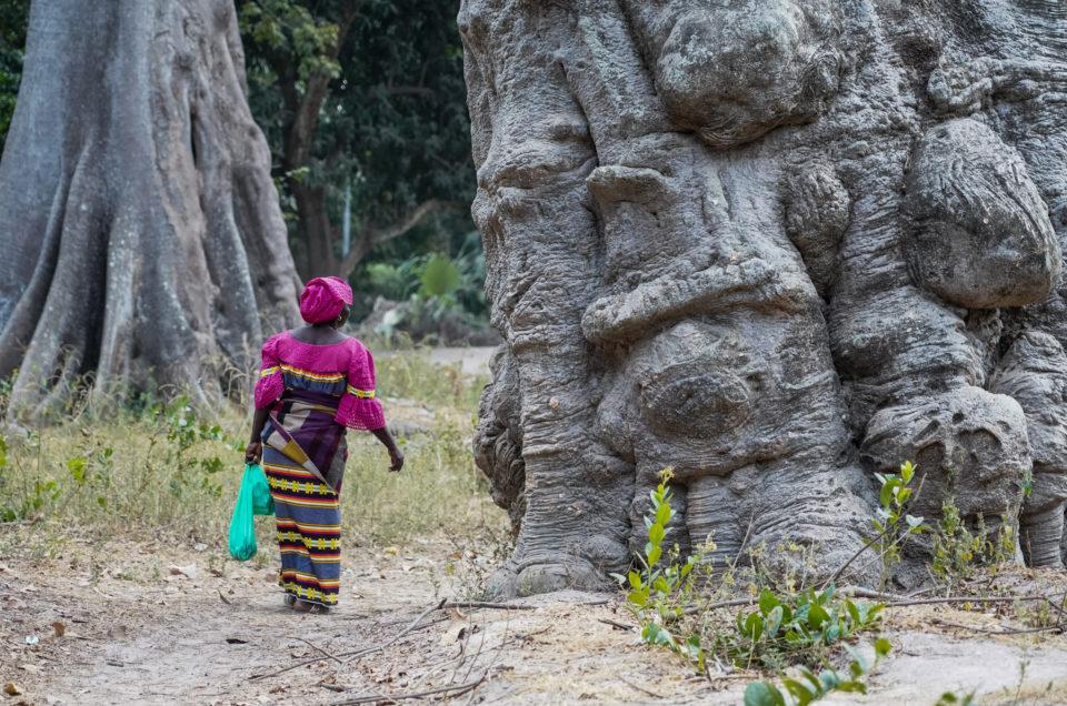Affiniam, nos premières émotions en Casamance