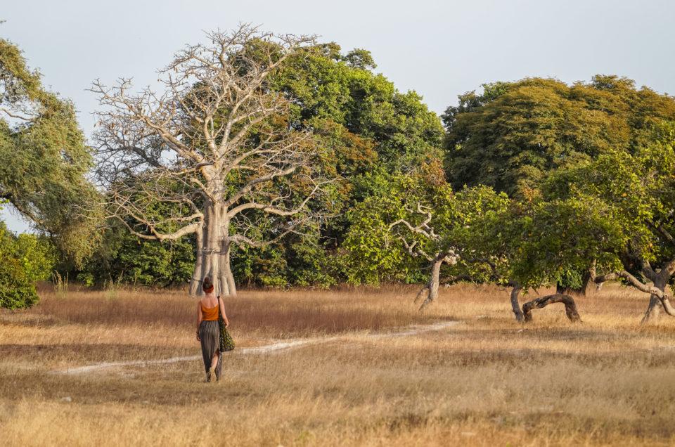 Elinkine et Efrane, un havre de paix en Casamance
