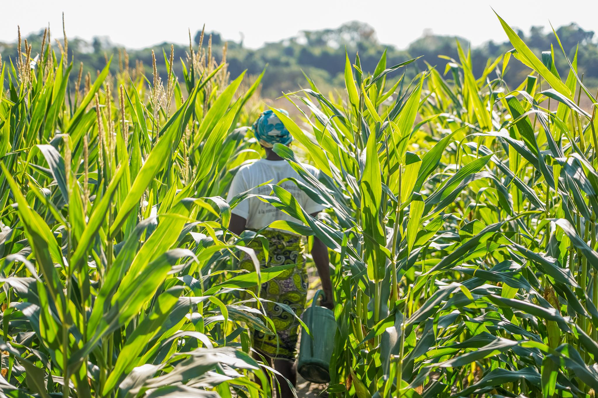 casamance-plantations-senegal-visite-oussouye