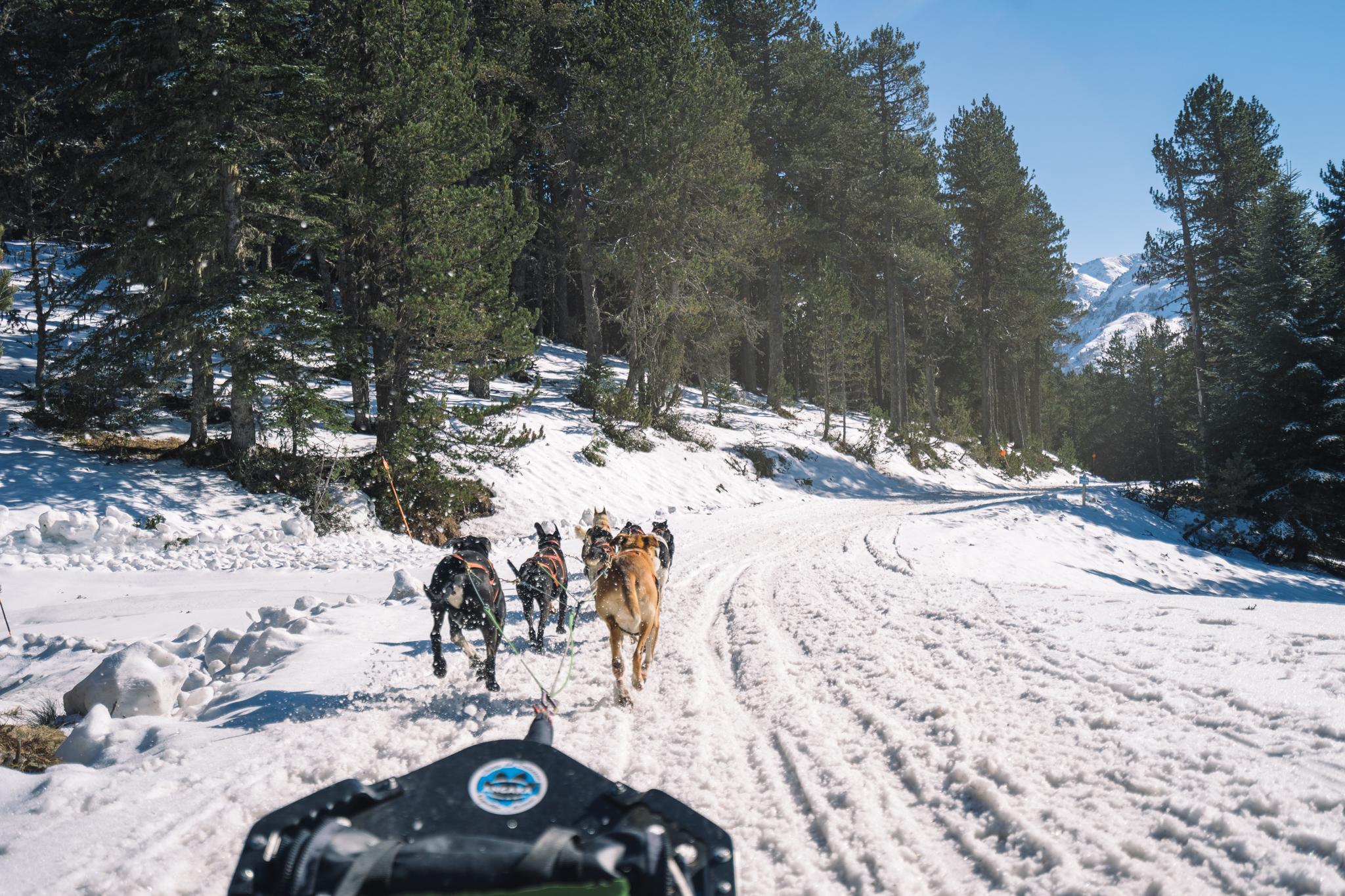 chiens-de-traineau-ariege-montagne-activité