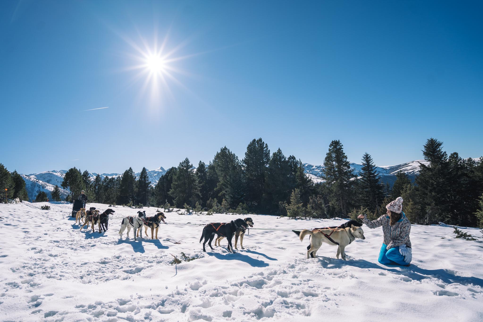 chiens-traineau-ariege-activité-montagne