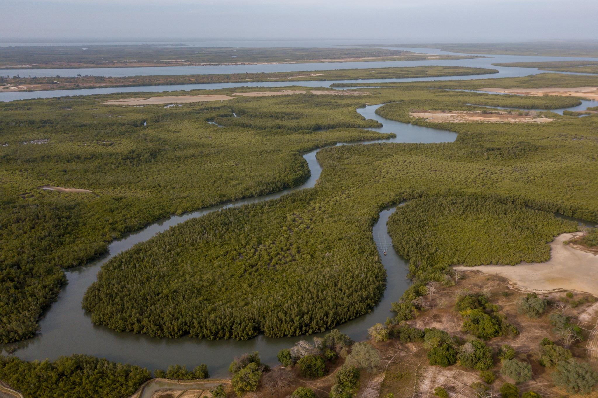 mangrove-efrane-csamance-senegal